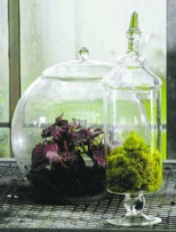 Simple ideas for adorable terrariums 50