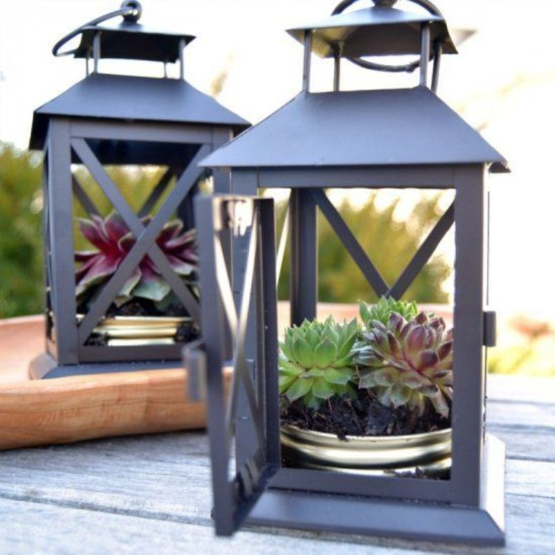 Lanterns with succulents