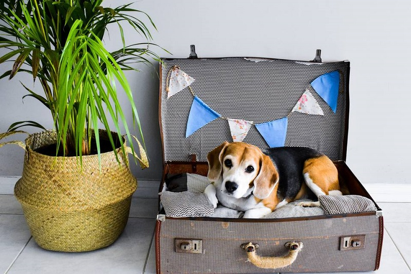 Suitcase for Dog Bed