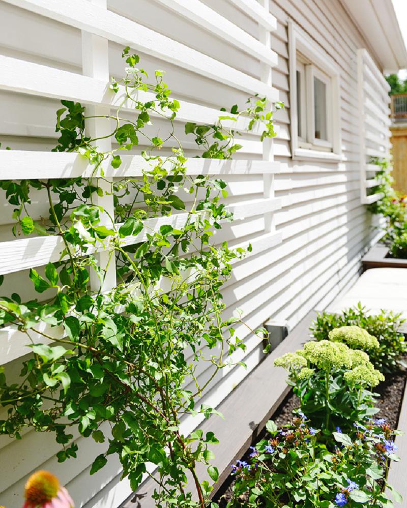 Modern trellis Functional DIY Trellis Ideas To Beautify Your Garden In Style