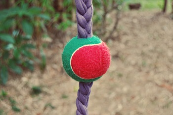 5 DIY Dog Toys Ideas That You Make On Your Own With The Things Around Your House