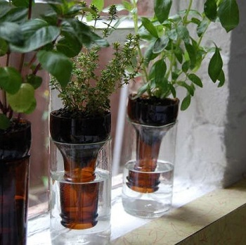 Bottle gardens for your herb garden Crafting DIY Self-Watering Planters You Can Do