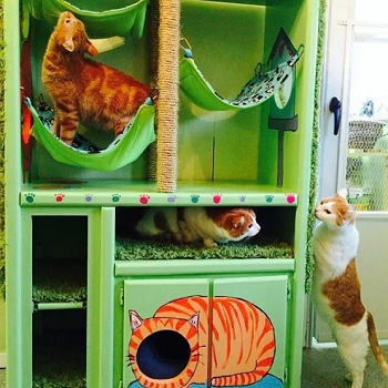 Cat condo from an old dresser DIY Highly Striking And Safety Cat House Ideas