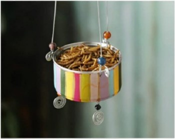 Diy colorful bird feeder from tuna can