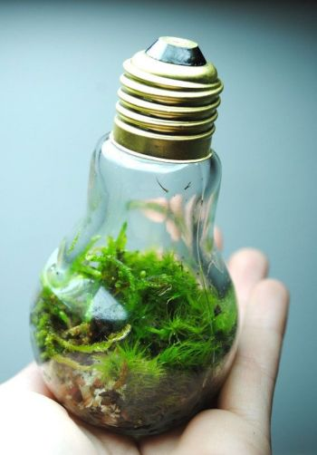 Diy nature-inspired bulb craft