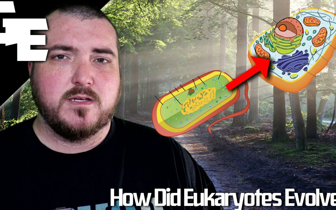 How Eukaroytes Evolved From Prokaryotes