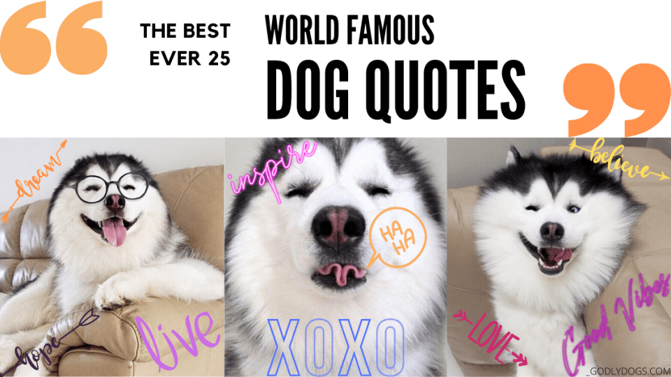 Cover of dog quotes by godlydogs.com