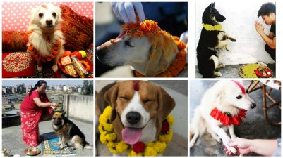 The significance of dogs in Nepalese festival 'Kukur Tihar'.