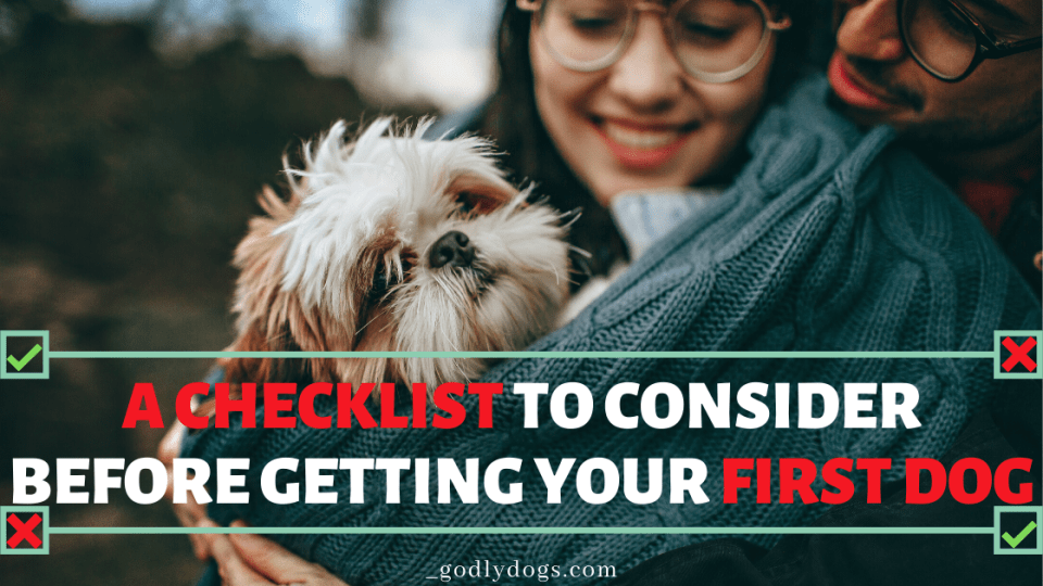 A checklist to consider before getting your first dog cover by godlydogs.com