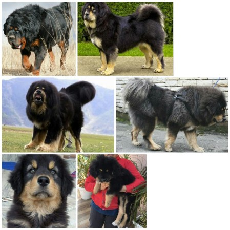Rare & Underrated Indian Dog Breeds That You Had No Idea