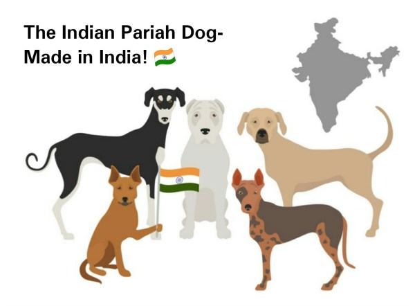 The Indian Pariah Dog- Made in India