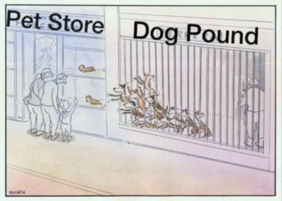 Buying vs adopting a dog: On the left, we have two pups being showcased with hefty price tags, at a fancy pet store. And right beside, there are so many dogs who have been waiting to be adopted for free, but nobody wants them. Also since the pounds and shelters have very limited space and resources to cater to the increasing number of strays, the man is approaching the dogs huddled together, with an injection to euthanize them as his last resort, while the mortified dogs, who have sensed their end, are reaching out for help! But the family outside has turned deaf ears towards their cries and stands hypnotized by the plush pups at the store! Heart-wrenching, isn't it?