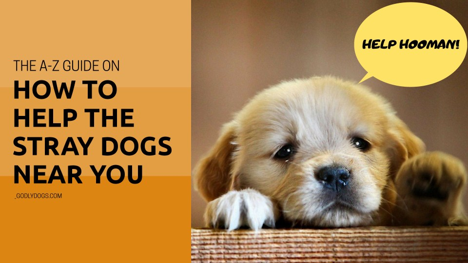 How to help the stray dogs near you by godlydogs.com cover.