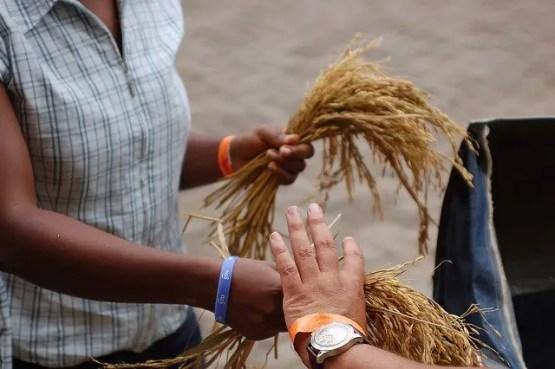 Gleaning Grain