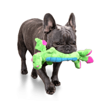 Medium Dog Toy Size