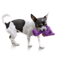 Mini Dog Toy Size