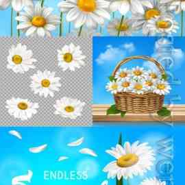 Chamomile on the background of the sky in vector Free Download