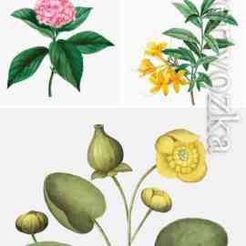 Vector different flowers Free Download