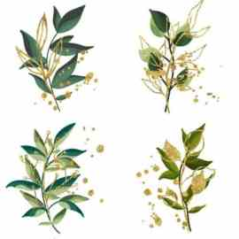 Collection of Plants, Leaves and Flowers Vector Templates Free Download