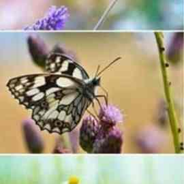 Butterflies set stock photo Free Download