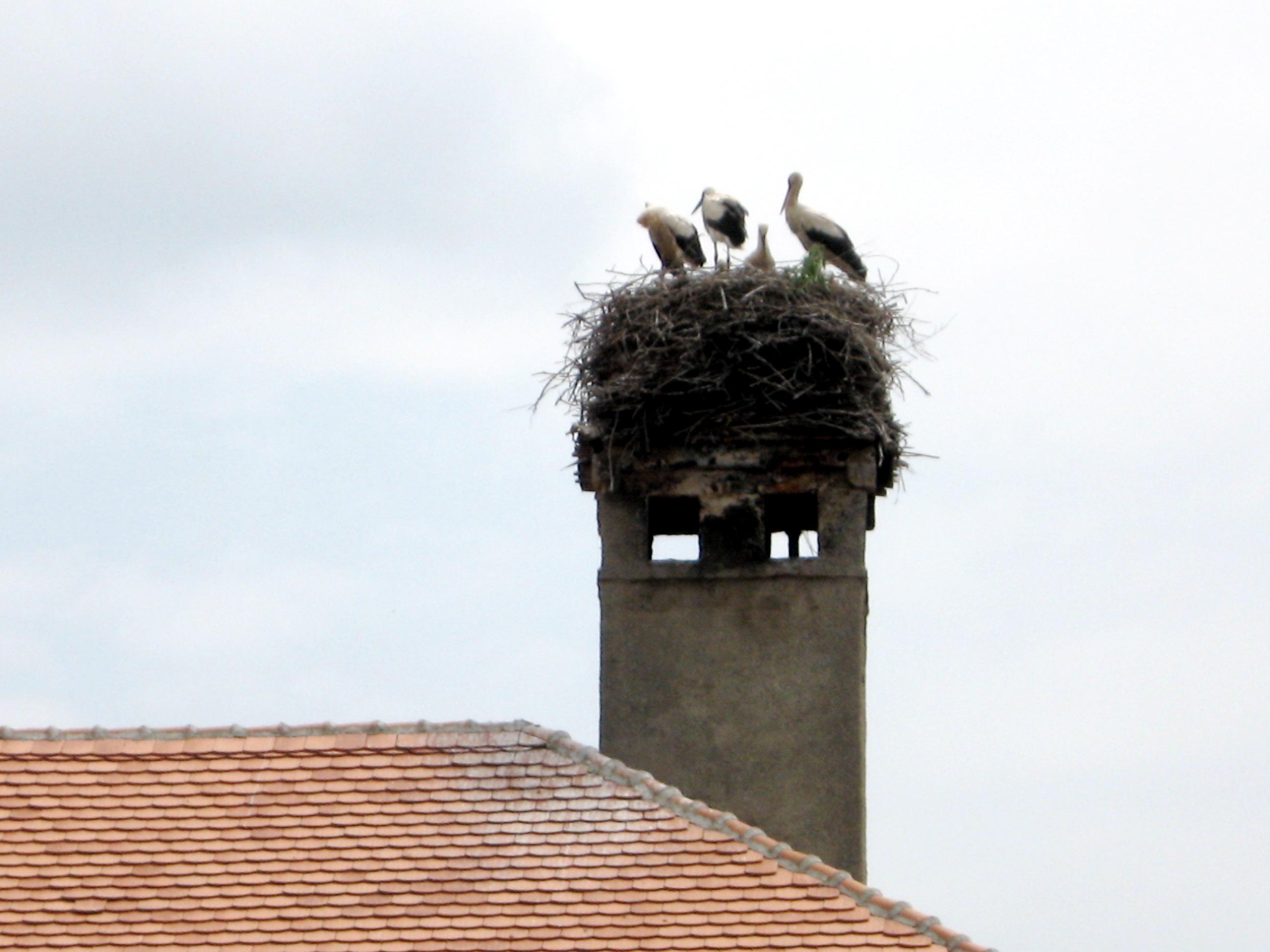 Storks like Romanian Summers