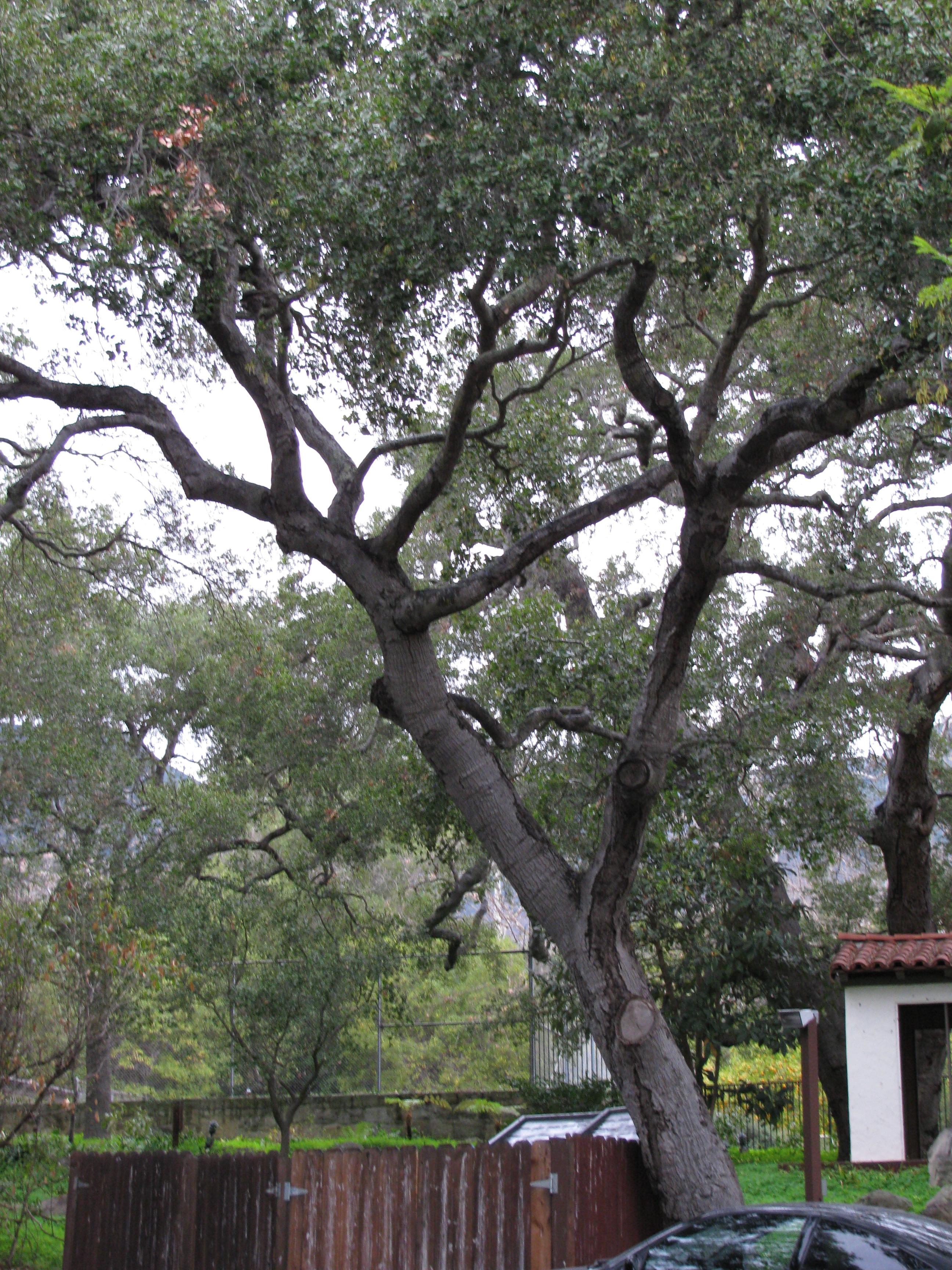 Beautiful Nature at La Casa de Maria