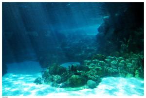 Underwater_Ocean_Floor_Light_by_Della_Stock