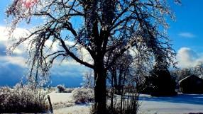 Oh Christmas Tree 46 - Version 2