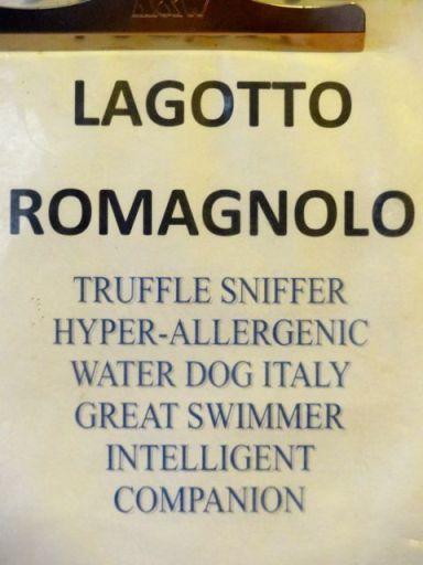 Lagotto Romagnolo