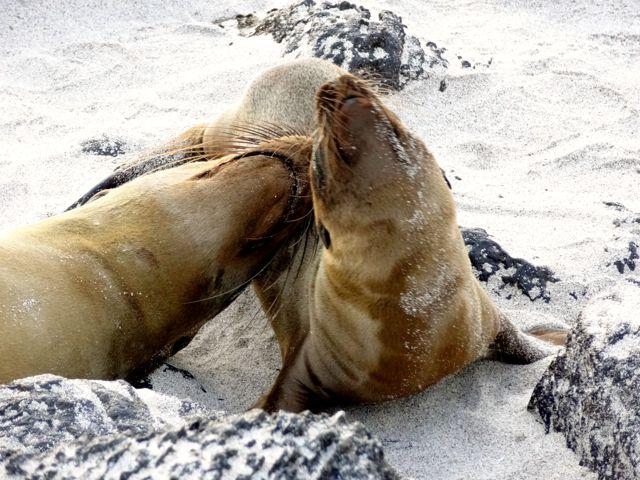 sea lions2