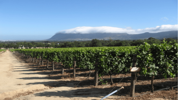 Constantia Winery