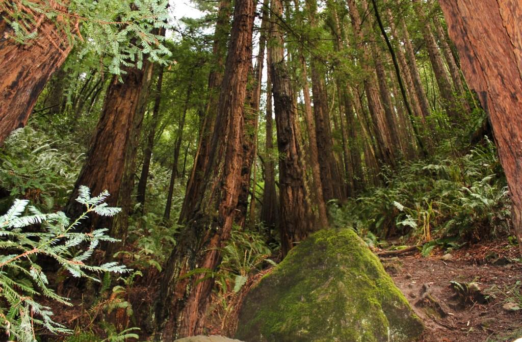 Muri Woods Trail