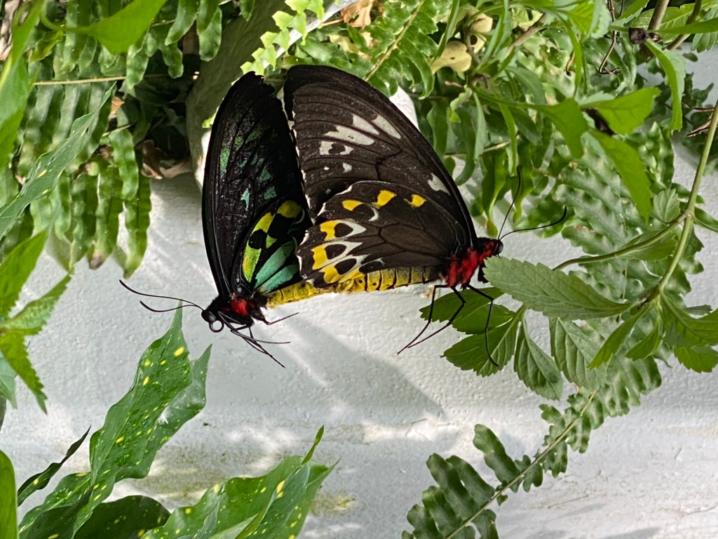 Key West butterfly garden