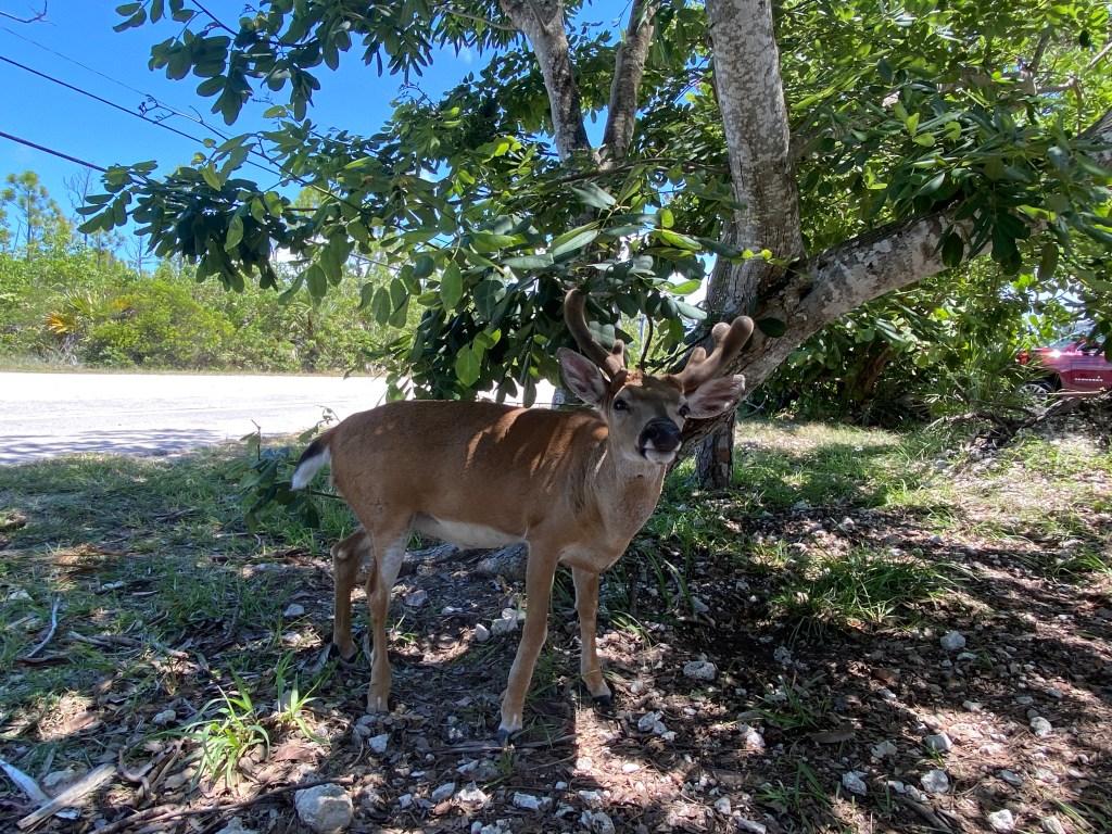Up the keys ecotour in Florida Keys