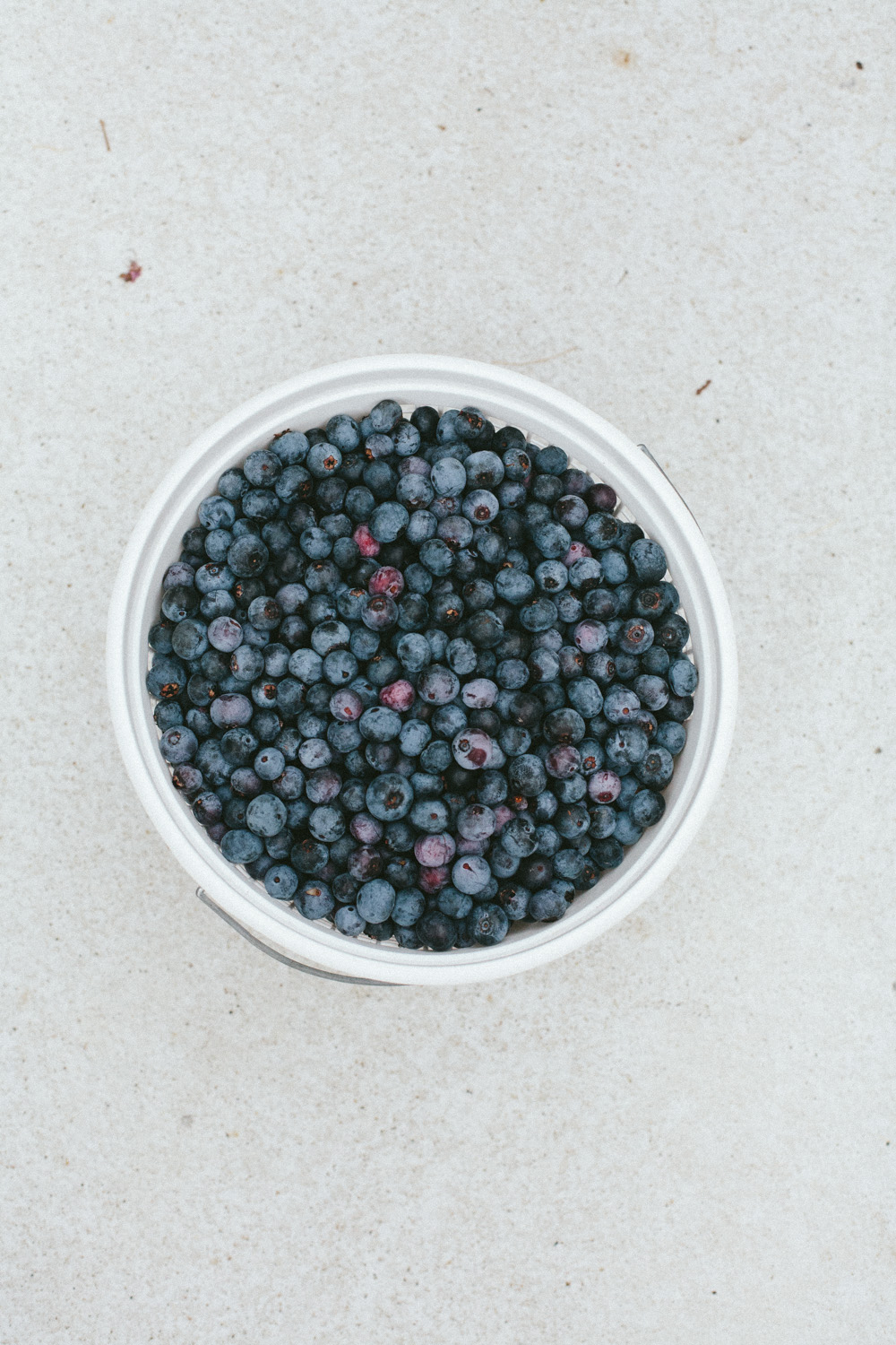 easy blueberry recipes to try