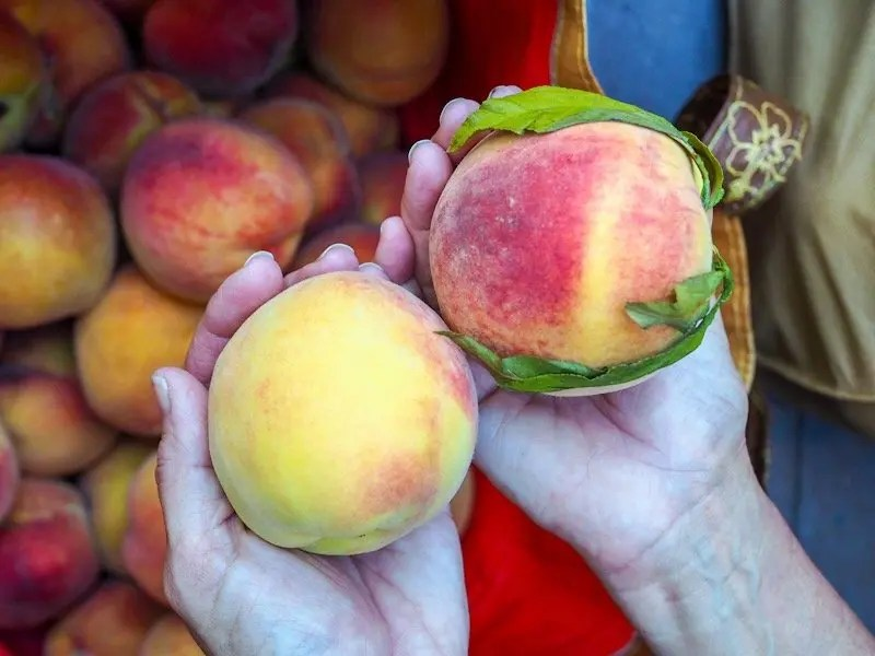Fresh peaches in Medford Oregon