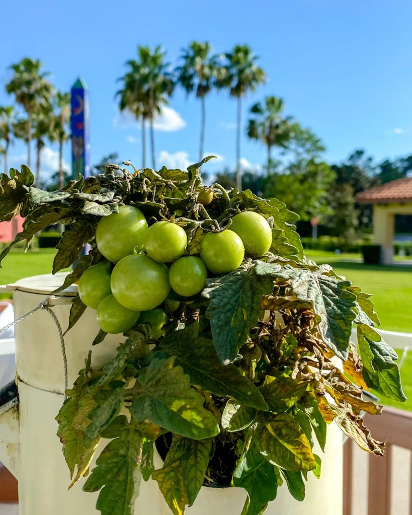 The Garden. 29 Socially Distanced Fun Things To Do on Vacation at Wyndham Grand Orlando Resort Bonnet Creek