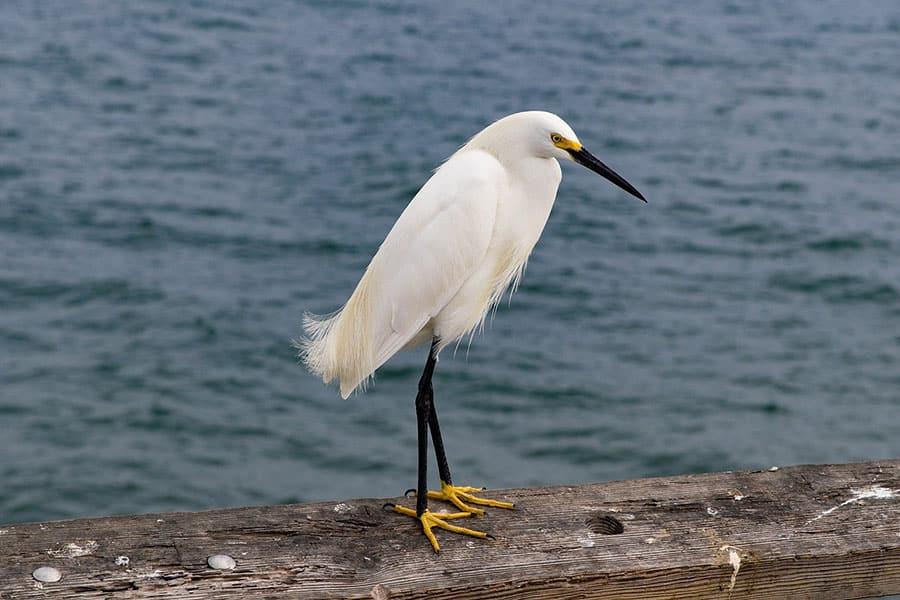 Vogelkot