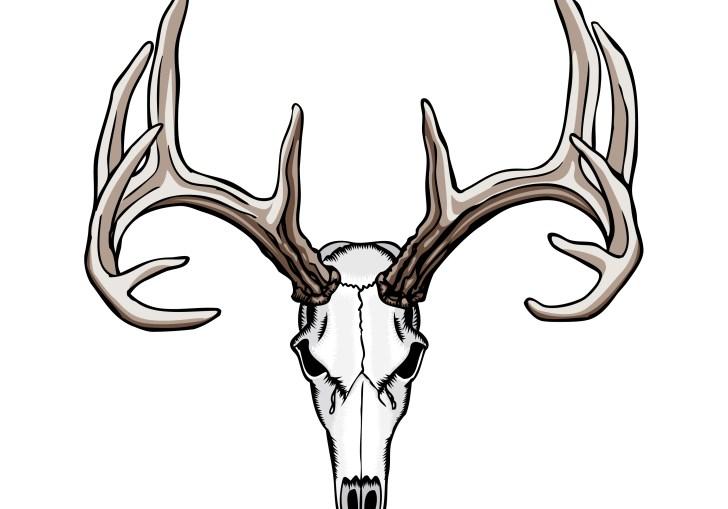 Deer Skull Mount Ideas