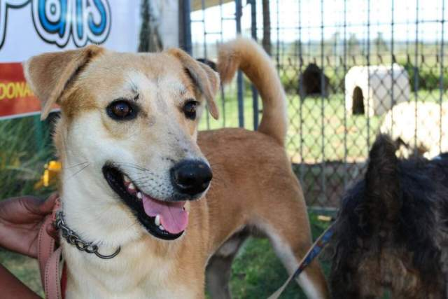 HELP THEM: Cody is one of the many friendly pets that will be on the move with  Pet   Pals  animal sanctuary later this year. Cody is also one of the many pets up for adoption Picture: SUPPLIED