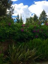 The Gardens among the Incan Ruins in Cuenca, Ecuador