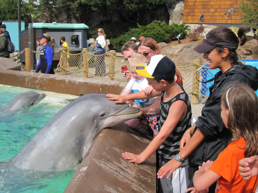 petting a dolphin, SeaWorld San Diego Dolphin Interaction