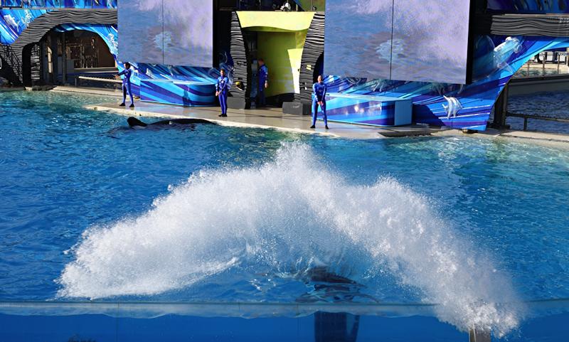 orca / killer whale splash