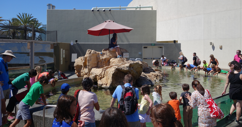 crowds enjoying a show outside at Aquarium of the Pacific