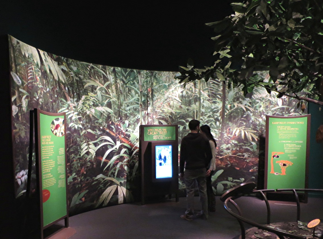 cacao tree jungle, chocolate exhibition