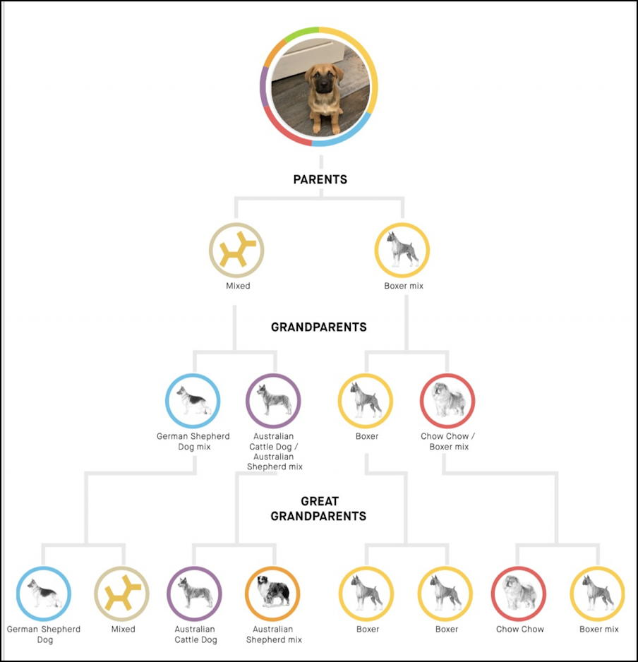embark dog dna test - family hereditary tree parents