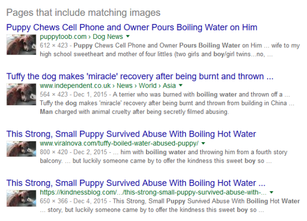 Burned puppy search