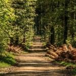 forestとwoodsの違い「森の中でクマさんに会いました」の森はどっち?
