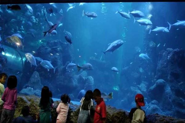 Harga Tiket Masuk Seaworld