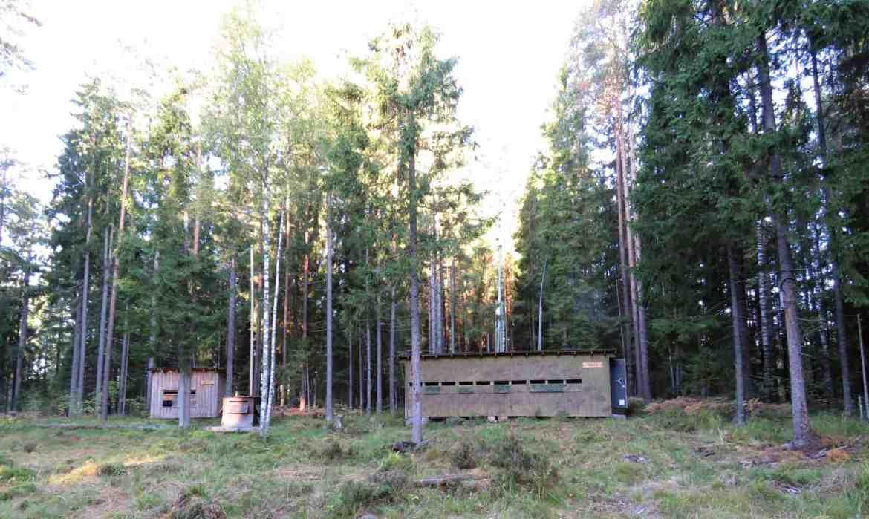 gogirlrun_estland_outdoor_baerenbeobachtung-alutaguse19